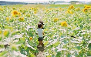 大垣ひまわり畑2019の最新情報!夏は大垣市の『ひまわり畑』で楽しもう!!